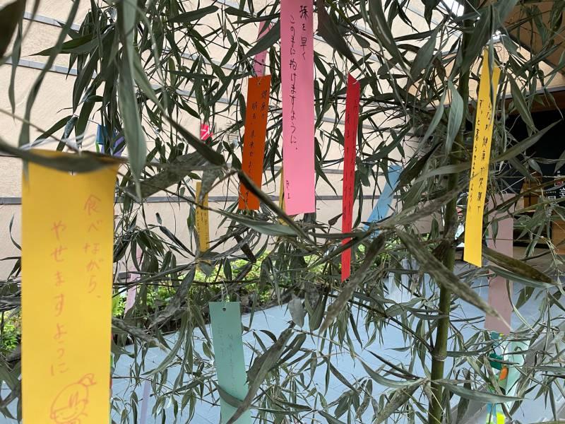 ☆★☆星に願いをキャンペーン☆★☆ ~ 山鹿平山温泉 旅館善屋通信vol.74